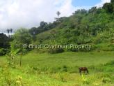 Farm for sale in Campina Grande - Grazing horse