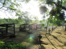Farm for sale in Campina Grande - Nursery area for calves