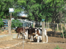 Farm for sale in Campina Grande - Calves on the farm