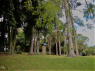 Island/Waterfront for sale in Florianopolis - Forest on the island