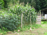 Farm for sale in Sao Paulo - Vegetable garden
