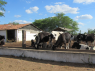 Farm for sale in Campina Grande - Cattle feeding