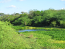 Farm for sale in Campina Grande - Part of the river within land limits