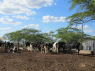 Farm for sale in Campina Grande - More cattle feeding