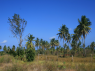 Land for sale in Joao Pessoa - Palms on the land area